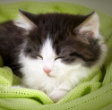 bedding-donate-shelter