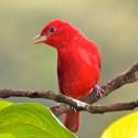 bird in latin america