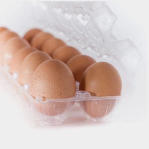 egg-carton-plastic