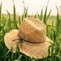 straw-hat-250