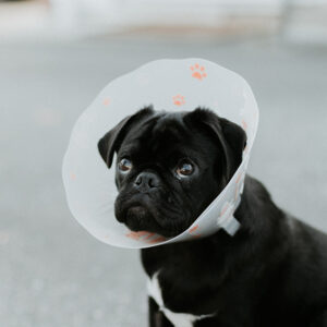 recovery-cone